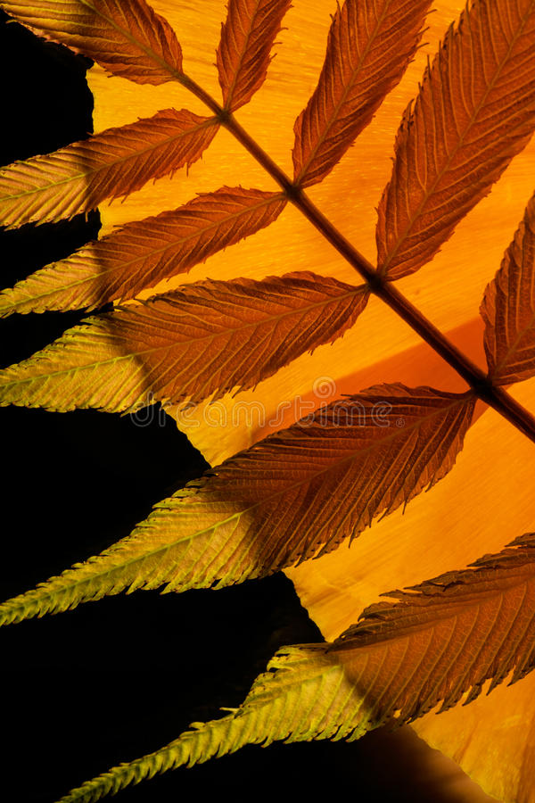 Colorful Orange and Red Palm Leaf Arrangement. A macro photo of a brightly lit orange and red palm leaf. I illuminated it from behind to bring out the bright royalty free stock photo