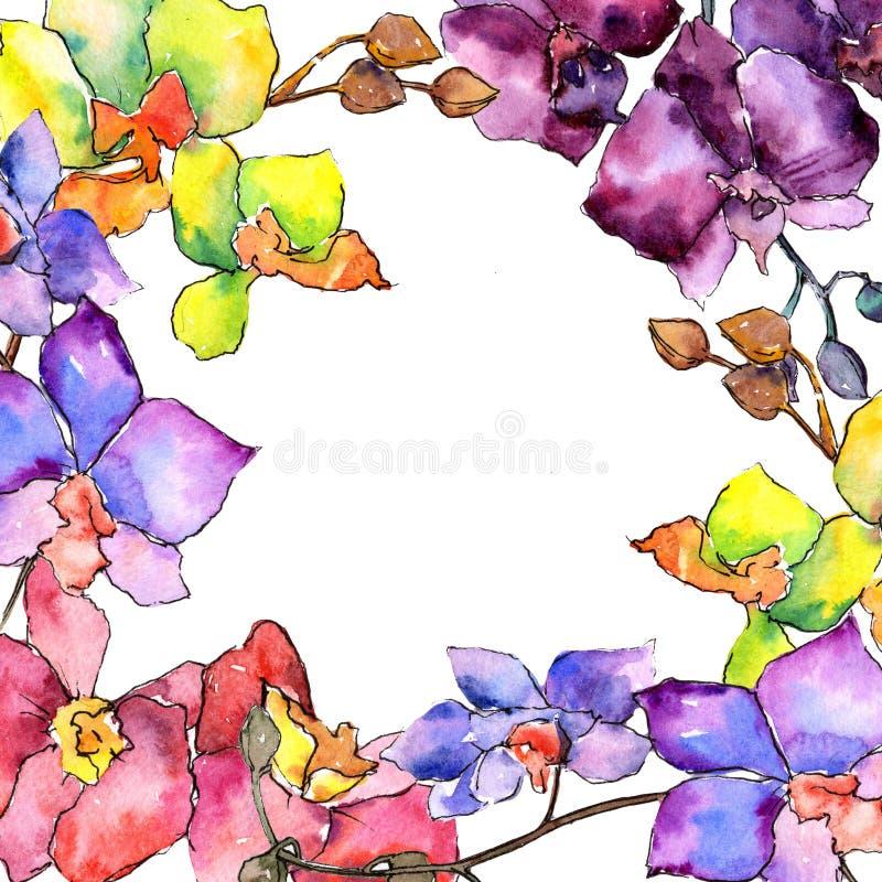 Colorful orchid. Floral botanical flower. Wild spring leaf wildflower frame. Aquarelle wildflower for background, texture, wrapper pattern, frame or border stock illustration