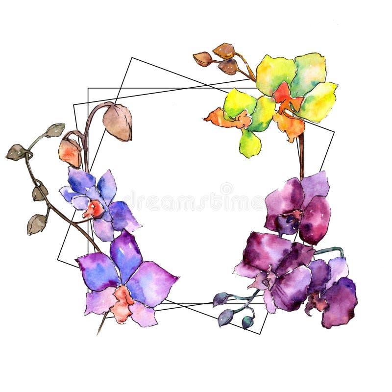 Colorful orchid. Floral botanical flower. Wild spring leaf wildflower frame. Aquarelle wildflower for background, texture, wrapper pattern, frame or border vector illustration