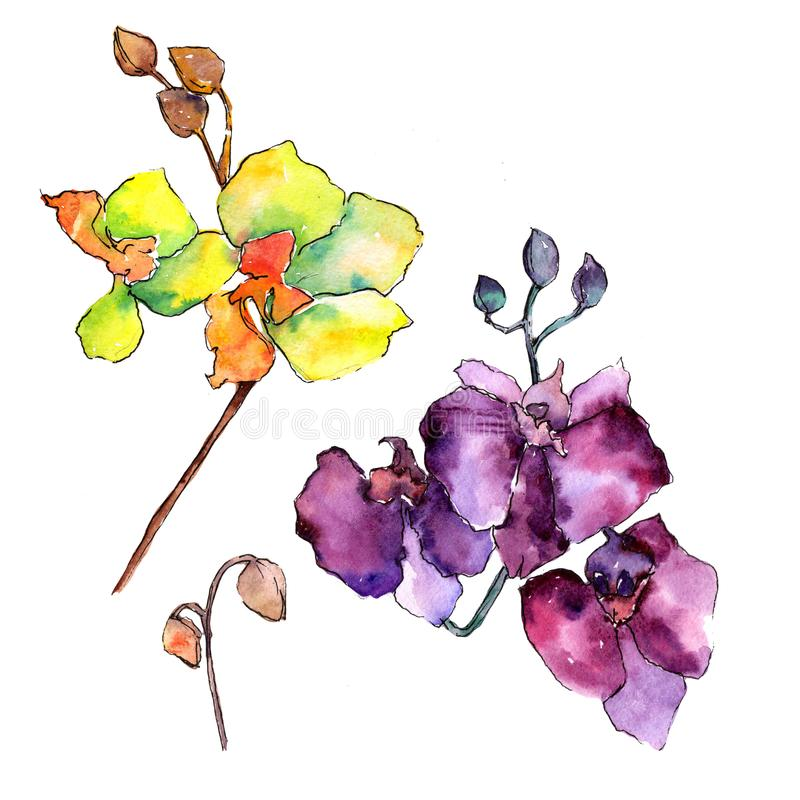 Colorful orchid. Floral botanical flower. Wild spring leaf wildflower isolated. Aquarelle wildflower for background, texture, wrapper pattern, frame or border royalty free illustration