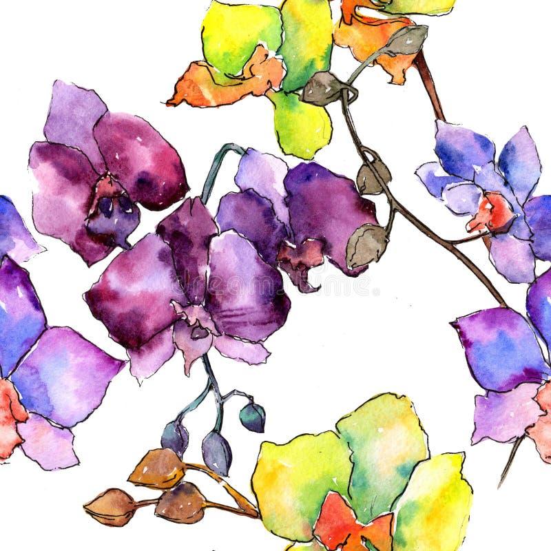 Colorful orchid. Floral botanical flower. Wild spring leaf wildflower pattern. Aquarelle wildflower for background, texture, wrapper pattern, frame or border vector illustration