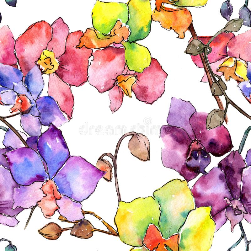 Colorful orchid. Floral botanical flower. Wild spring leaf wildflower pattern. Aquarelle wildflower for background, texture, wrapper pattern, frame or border royalty free illustration