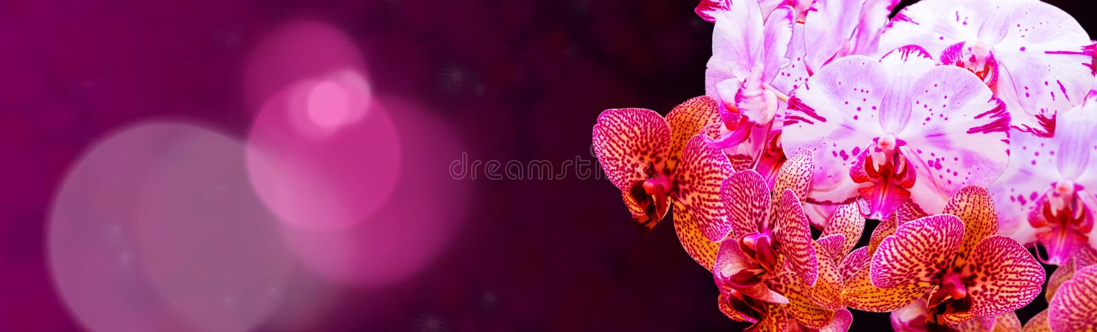 Colorful orchid panorama stock images