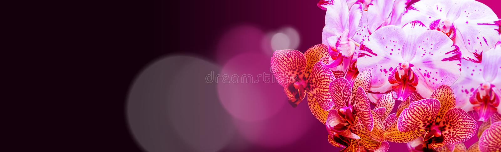 Colorful orchid panorama royalty free stock photos