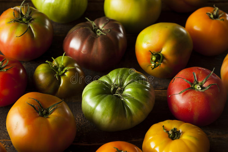 Colorful Organic Heirloom Tomatoes. Fresh from the Garden royalty free stock photography