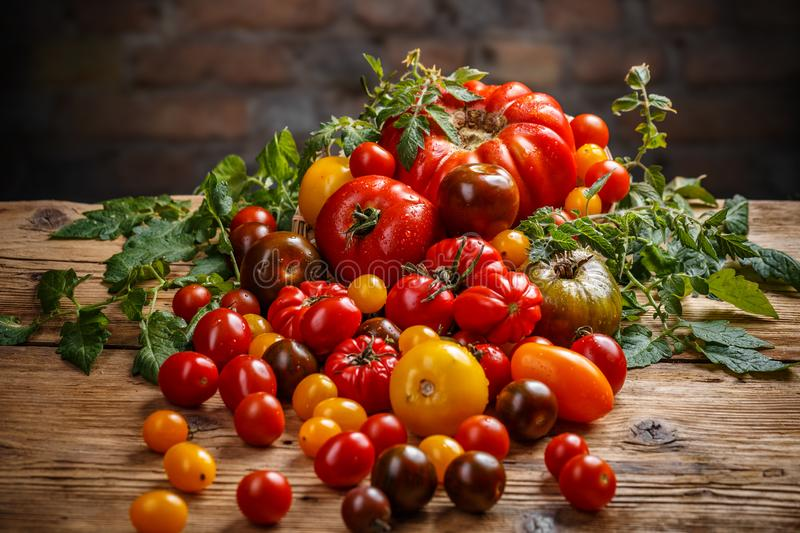 Colorful organic tomatoes stock photography