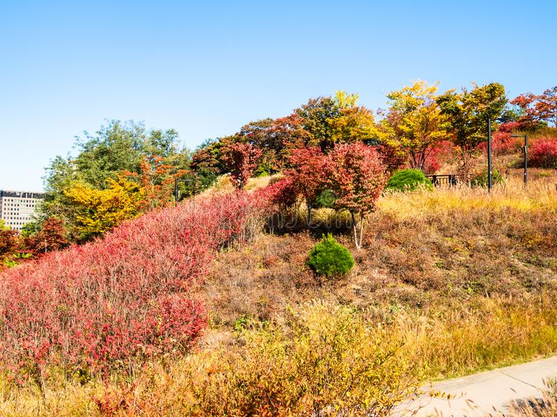 Colorful overgrown slope of Nam Mountain in Seoul stock photos