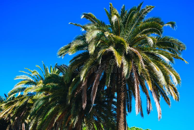 Colorful palm trees under deep blue sky stock photos