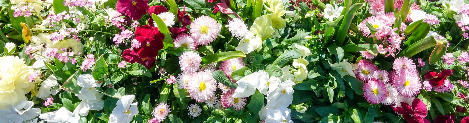 Colorful panorama with different kinds of flowers.  stock photography