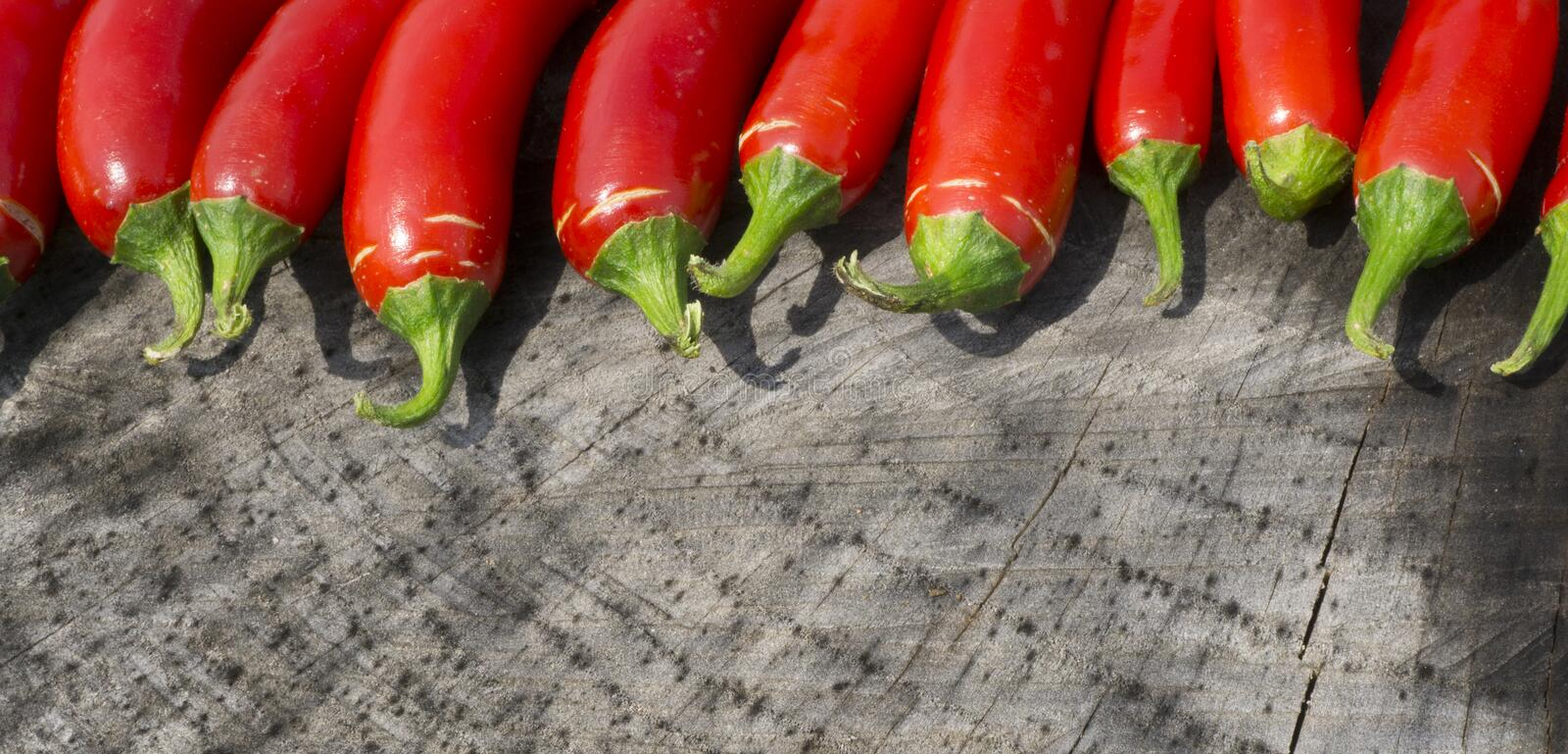 Colorful Panoramic Photo of Red Serrano Peppers. A close up panoramic photo of some bright red Serrano peppers from my garden. I arranged them on a tree stump to royalty free stock images