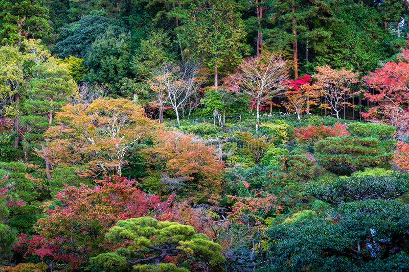 Colorful park of Kyoto in autumn. Kyoto, Japan - November 19, 2018: Tourist stop on hill to take photo in colorful park, tree change color during autumn and royalty free stock photos