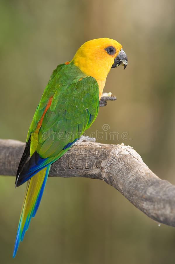 Download Colorful Parrot stock image. Image of amazonian, large - 11550015