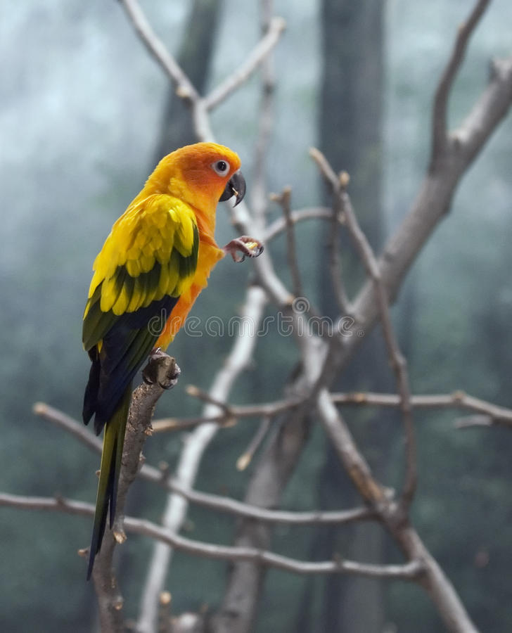 Free Colorful Parrot Royalty Free Stock Images - 16696239