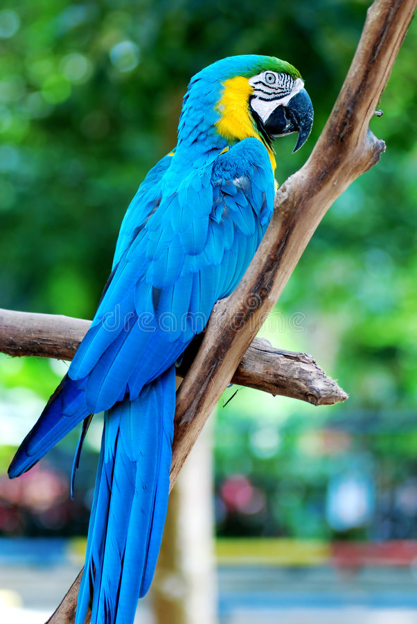 Free Colorful Parrot Royalty Free Stock Photography - 1770827