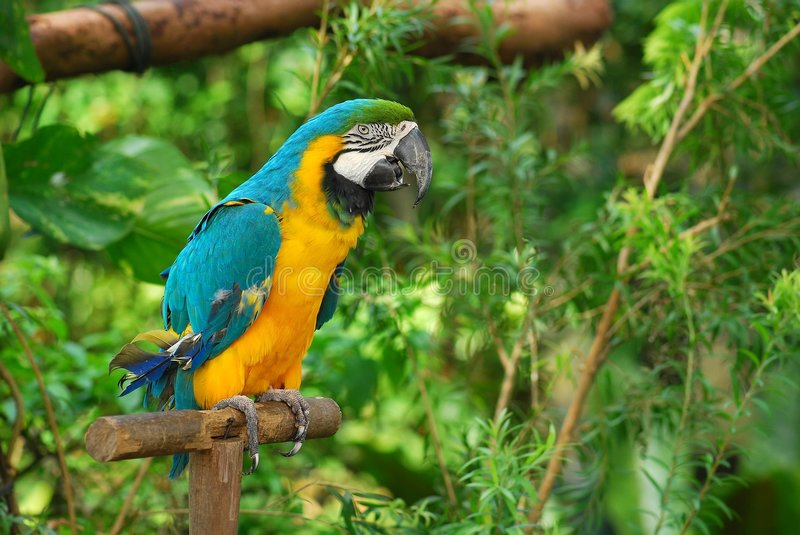 Colorful parrot stock photography