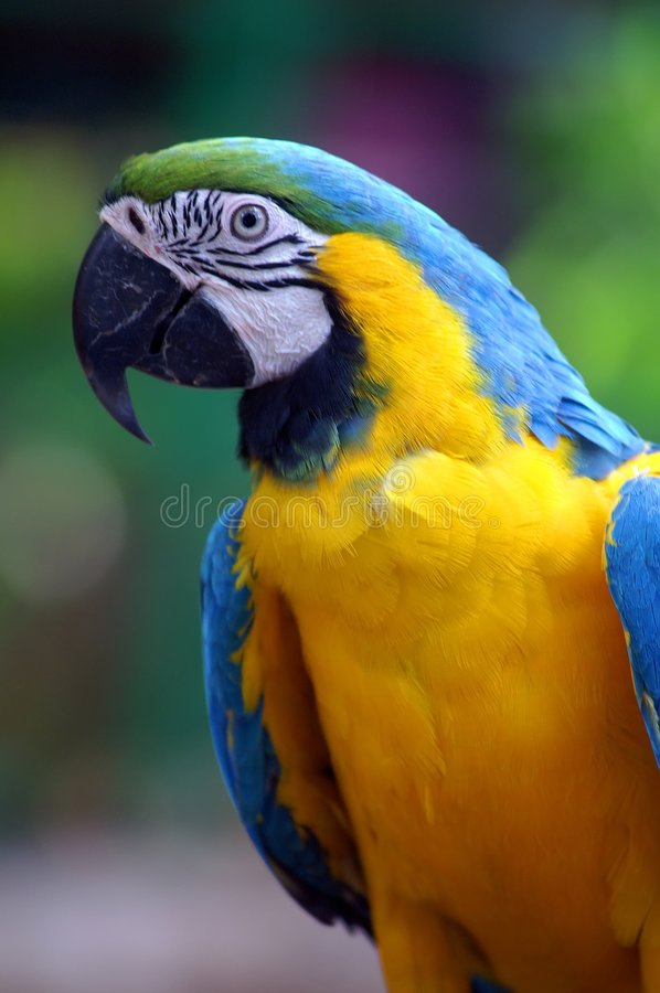 Free Colorful Parrot Royalty Free Stock Images - 6790819