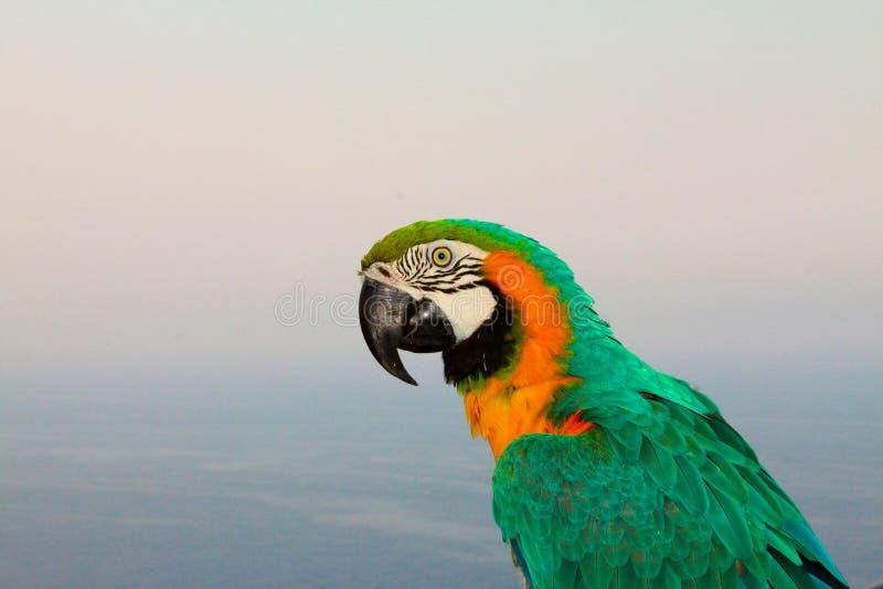 Colorful Parrot Against Blue Skies Free Public Domain Cc0 Image