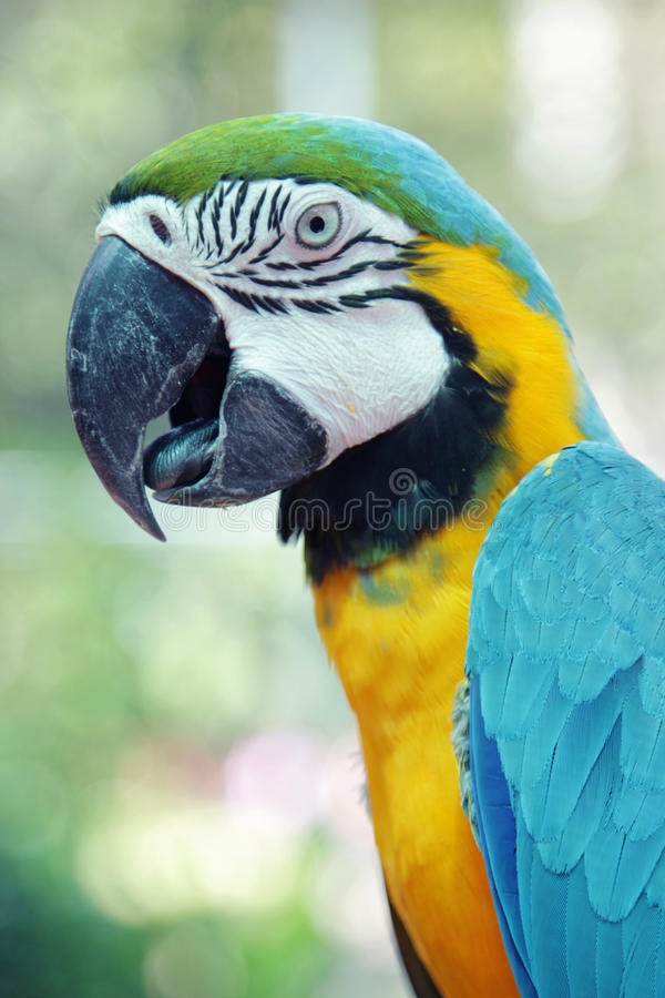 Colorful parrot birds. Close up of colorful parrot birds royalty free stock photos