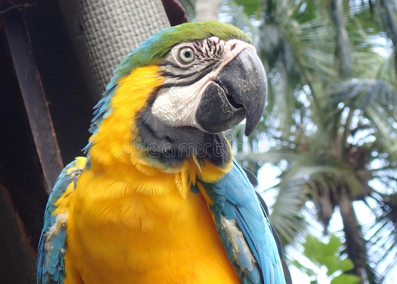 Colorful Parrot in Colombian Rainforest royalty free stock photography