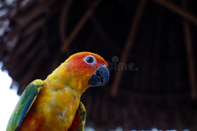 Colorful parrot on a dark background royalty free stock photography