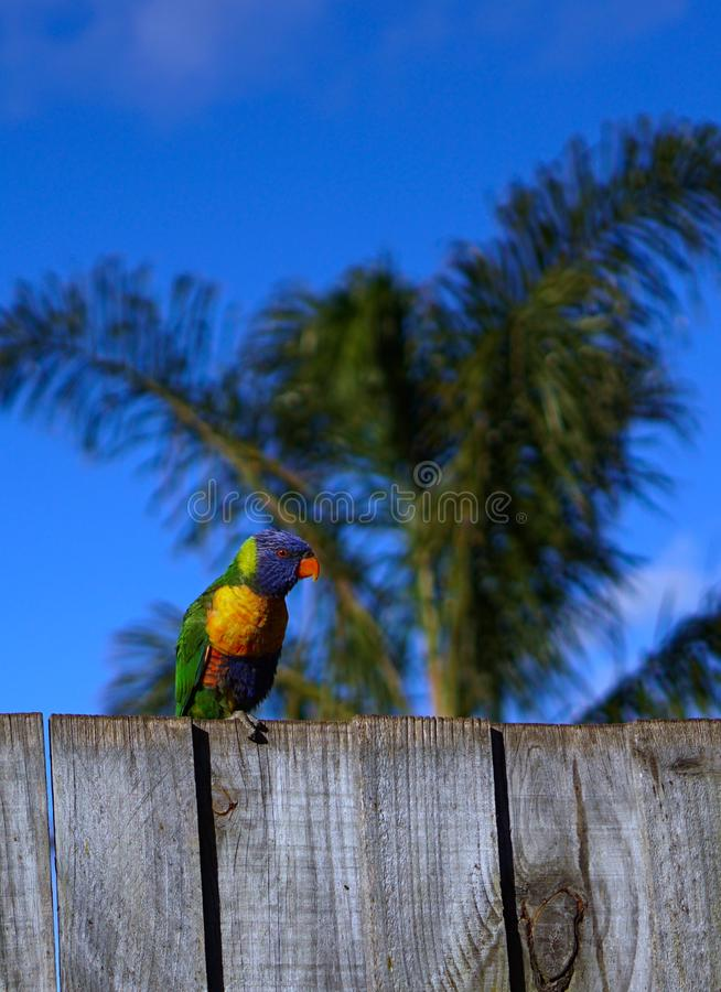 Colorful parrot with palm tree and blue sky background stock photo