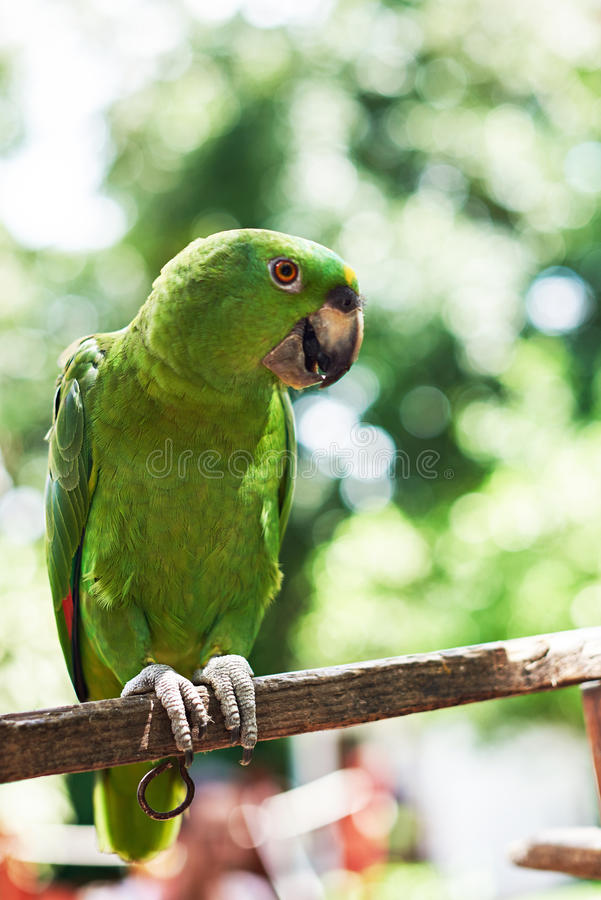 Colorful parrot sit on branch. With blurred nature background royalty free stock photos