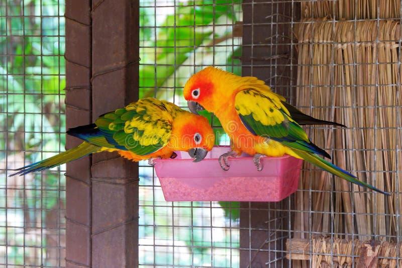 Colorful Parrots Eating Birdseed. Closeup Photo of Colorful Parrots Eating Birdseed in the Farm royalty free stock photos