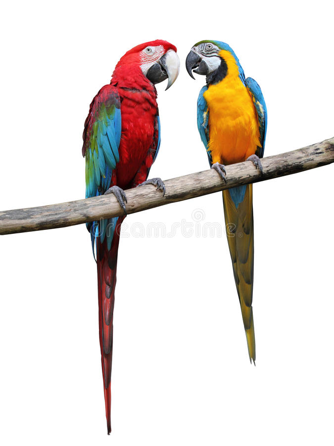 Colorful parrots saying. stock photo