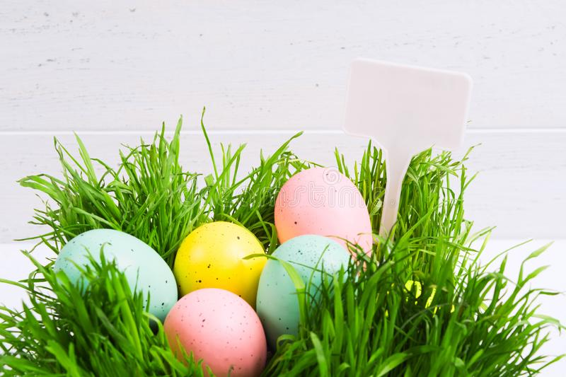 Colorful pastel Easter eggs in grass. Easter hunt cocept with white background with white label royalty free stock images