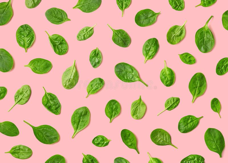 Colorful pattern of fresh spinach leaves royalty free stock photos