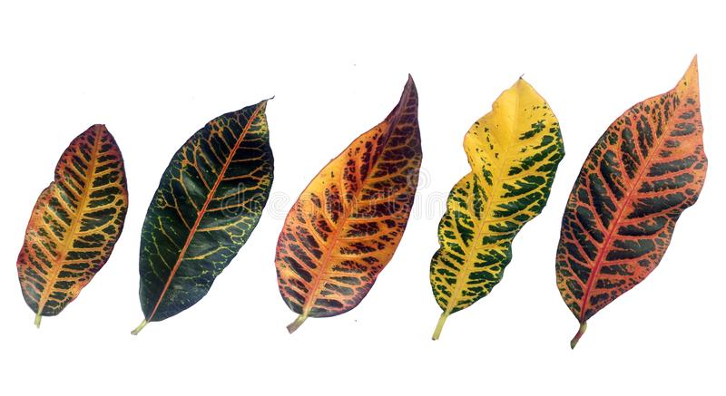 Colorful pattern leaf tropical royalty free stock photo