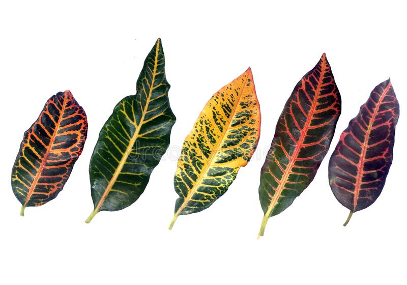 Colorful pattern leaf tropical stock photos
