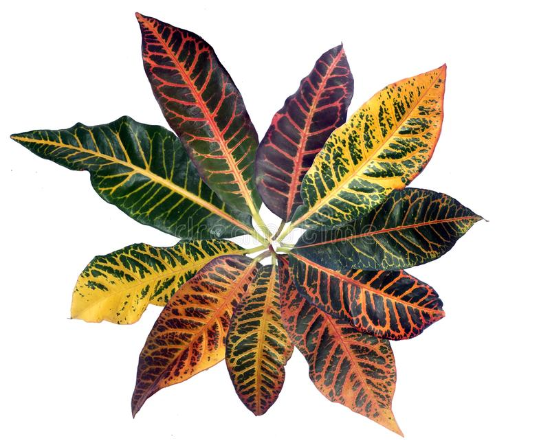 Colorful pattern leaf tropical stock images