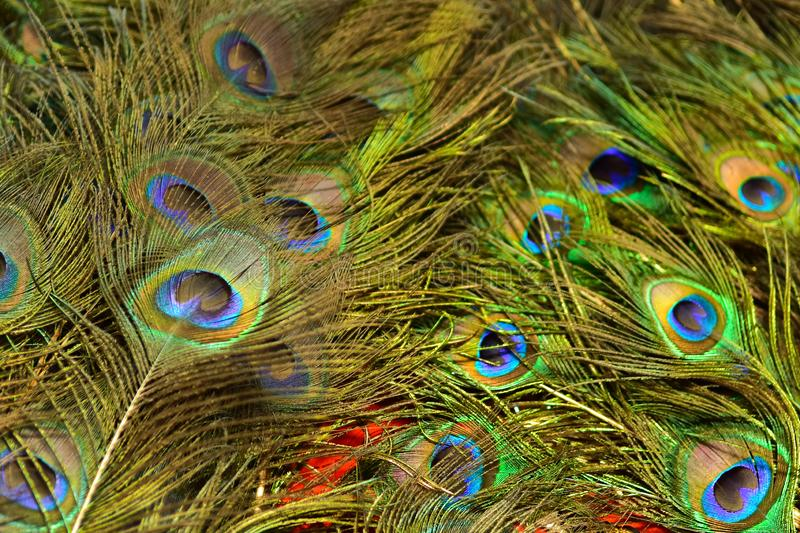 Colorful patterns of thousands of beautiful birds. Real zise stock photos