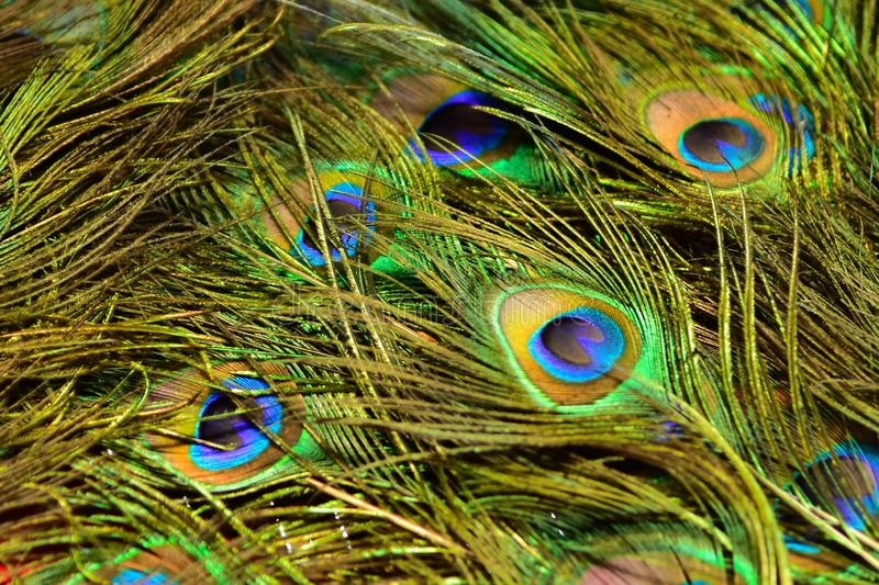 Colorful patterns of thousands of beautiful birds. Real zise stock photo