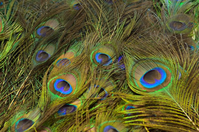 Colorful patterns of thousands of beautiful birds. Real zise royalty free stock photo