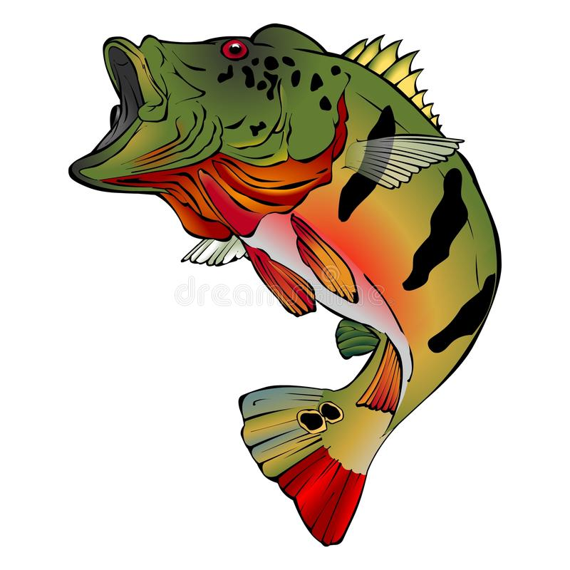 Colorful Peacock Bass Vector Illlustration royalty free stock image