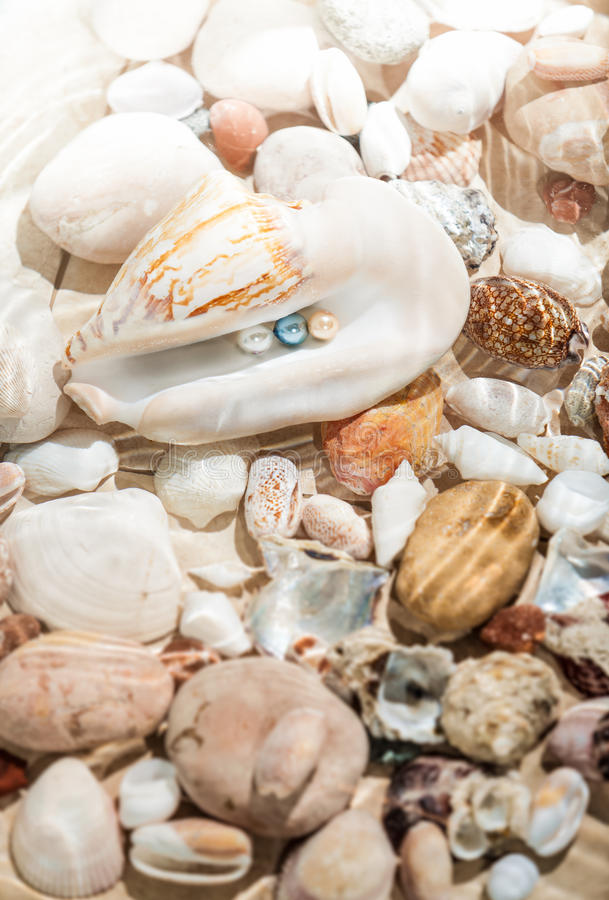 Download Colorful Pearls Lying In Big Seashell Stock Photo - Image: 39852705