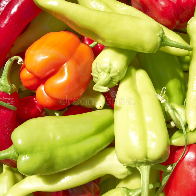 Download Colorful peppers closeup stock photo. Image of capsicum - 25977116