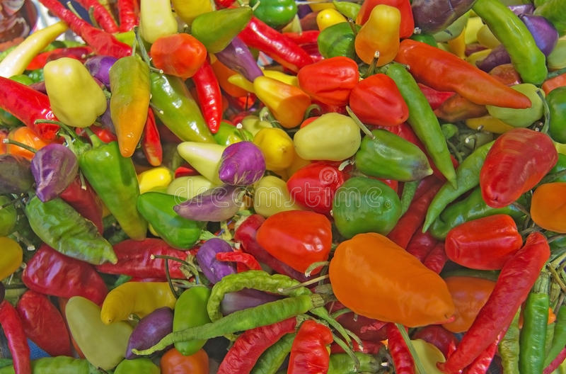 Colorful peppers on display royalty free stock photo