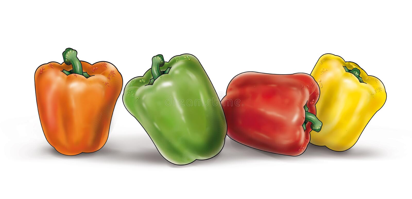 Colorful peppers on white illustration. Fresh red, yellow,green, and orange Belgium peppers with water droplets on them. Beautiful Belgium peppers illustration vector illustration