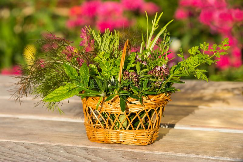 Colorful picture of a basket with fresh healing herbs. stock image