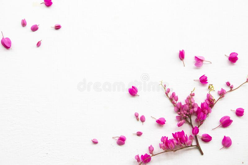 Colorful pink little flowers antigonon leptopus climber local flora arrangement flat lay postcard style. On background white wooden royalty free stock photography