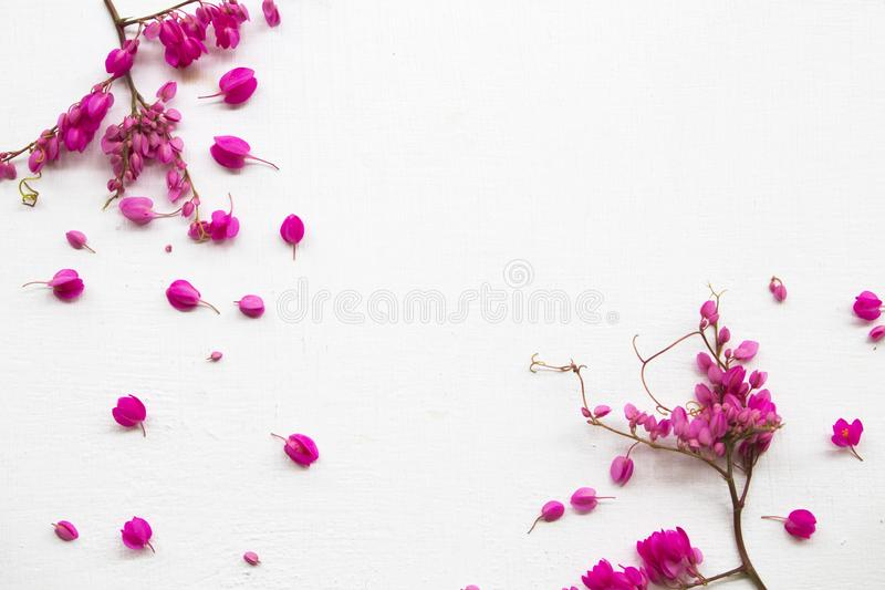 Colorful pink little flowers antigonon leptopus climber local flora arrangement flat lay postcard style. On background white wooden royalty free stock photos