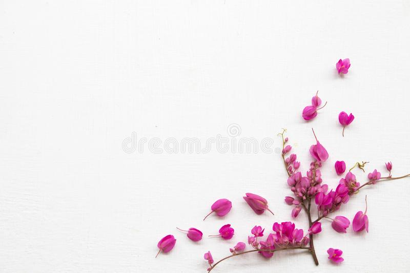 Colorful pink little flowers antigonon leptopus climber local flora arrangement flat lay postcard style. On background white wooden stock photography