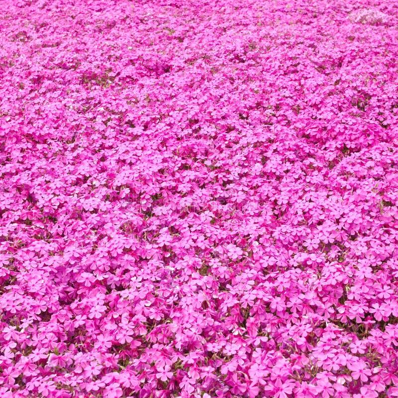 Colorful Pink Moss Stock Photos