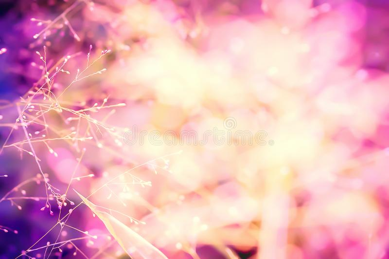 Colorful pink ,purple bokeh grass flower nature background stock photos