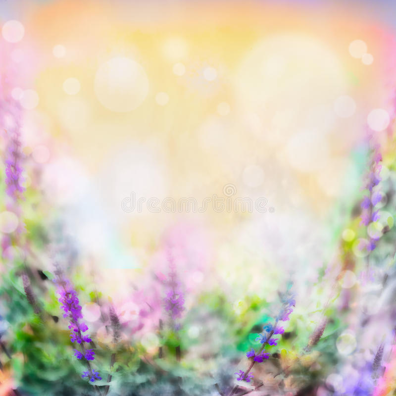 Colorful pink purple flowers blurred background with light and bokeh royalty free stock photography
