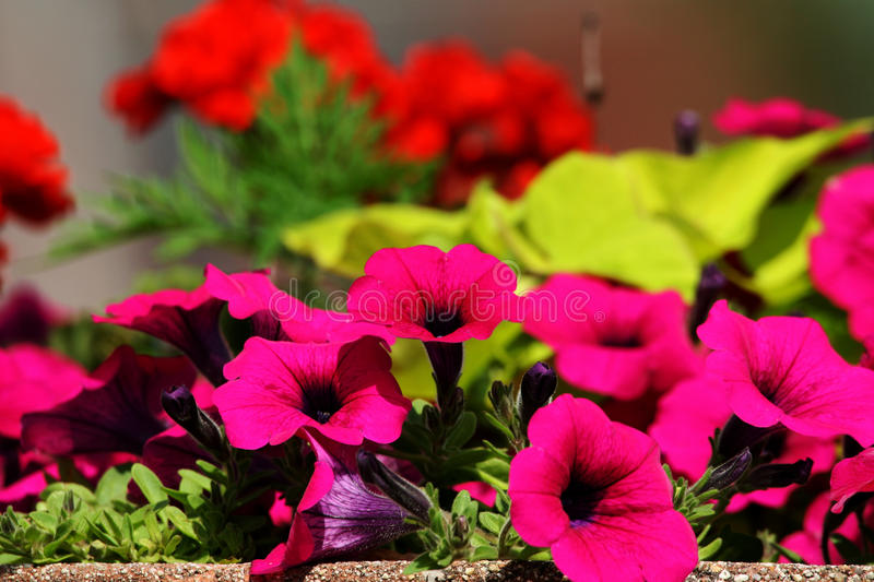 Colorful Planter royalty free stock photos