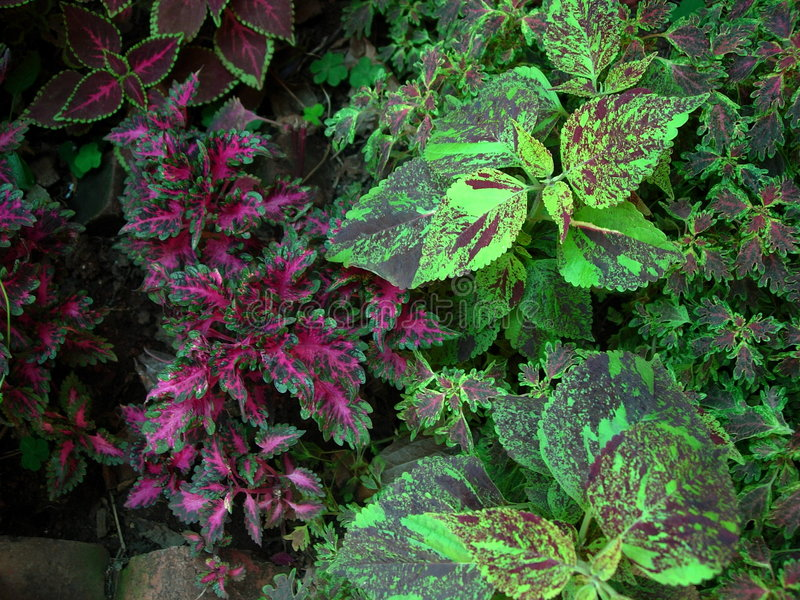 Colorful Plants royalty free stock image